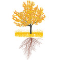 Cherry tree in autumn with roots vector image vector image