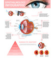 cross section of human eye anatomy structure vector image vector image