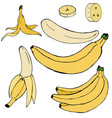 set of hand-drawn simple colored bananas vector image