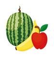 watermelon banana and apple fruits vector image