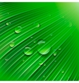 Green leaf with drops of water vector image vector image