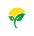 sun leaf eco logo vector image