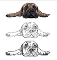 Drawing of lying bullmastiff vector image vector image