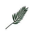 exotic tropical palm leaf botanical design vector image