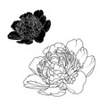 peony rose flowers isolated black white contrast vector image vector image