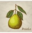Pomelo hand drawn Pomelo vector image vector image