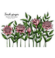 pink torch ginger flower and leaf drawing vector image vector image