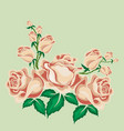 tea roses in cartoon style vector image vector image