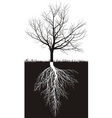 Cherry tree without leaves with roots vector image vector image
