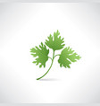 fresh green parsley salad healthy food icon vector image