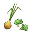 onion and broccoli vector image