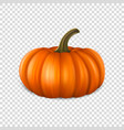 realistic pumpkin closeup isolated on transparency vector image