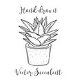 decoration plant succulent in a flowerpot hand vector image