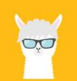 llama alpaca animal wearing sun glassess cute vector image vector image