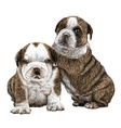 Puppy bulldogs 01 vector image