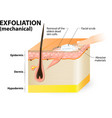 Exfoliation mechanical vector image