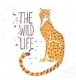 cheetah color vector image
