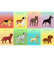 Groups of dog vector image