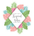 tropical label with palm leaves perfect for vector image vector image