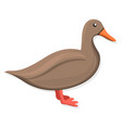 brown duck icon cartoon style vector image vector image