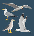 set of 4 sea gulls hovering soaring standing vector image vector image
