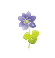 snowdrop flower floral icon realistic cartoon vector image vector image
