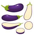 bright set of fresh eggplants isolated on vector image