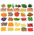 collection premium quality vector image