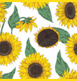 botanical seamless pattern with sunflower heads vector image