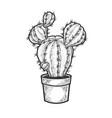 cactus plant in pot sketch vector image