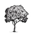 tree graphics vector image