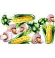 vegetables watercolor background mushrooms vector image vector image