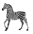 zebra drawing in black and white stripes isolated vector image