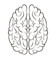 brain sign icon gyrus right and left vector image