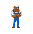 Bulldog Standing Arms Crossed Cartoon vector image vector image