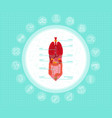 cartoon human body organs concept with stomach vector image vector image