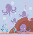 cute octopuses with starfish avatar character vector image vector image