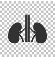 Human kidneys sign Dark gray icon on transparent vector image vector image