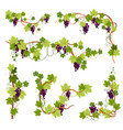 vine decor grapes bunches on branches or twigs vector image vector image