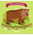 Zoo Animal Bear vector image vector image