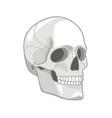 cartoon skull drawn cute gray skulls face concept vector image