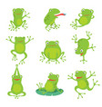 cute cartoon frogs green croaking toad on lotus vector image