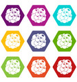 ovary icon set color hexahedron vector image vector image