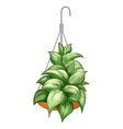 A pot with a hanging plant vector image vector image