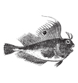Butterfly blenny fish engraving vector | Price: 1 Credit (USD $1)