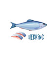 herring fish and fillet vector image vector image