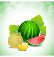 melon and watermelon vector image