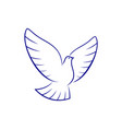 pigeon bird isolated holy dove vector image