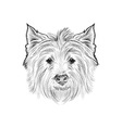 Sketch west highland white terrier Hand drawn vector image vector image