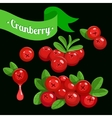 colorful branch of Cranberry 3 vector image vector image